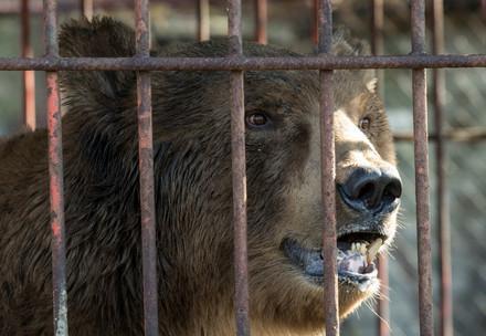 Un ours en cage