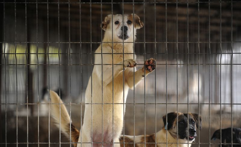 dogs-cage-blurry-background
