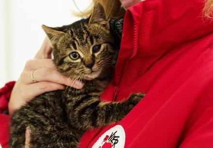 VIER PFOTEN Mitarbeiterin kümmert sich um einen junge Katze