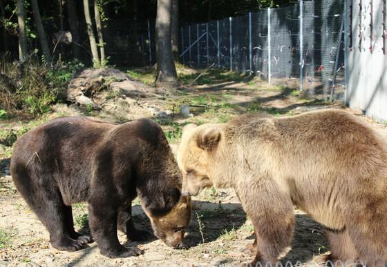 Rettung von Leo und Melanka