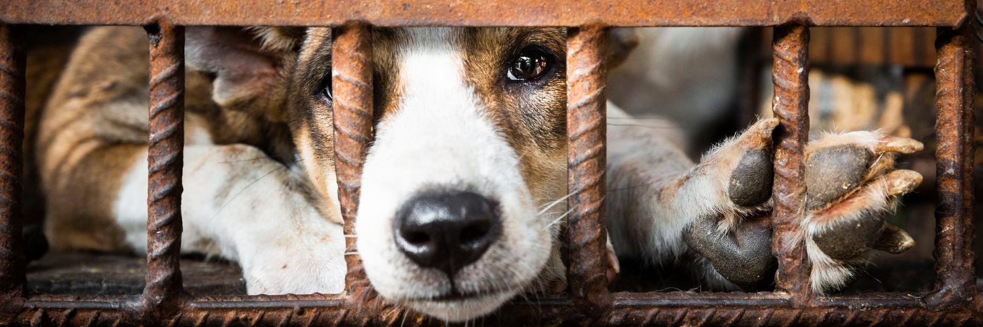 Stop au commerce de viande de chat et de chien