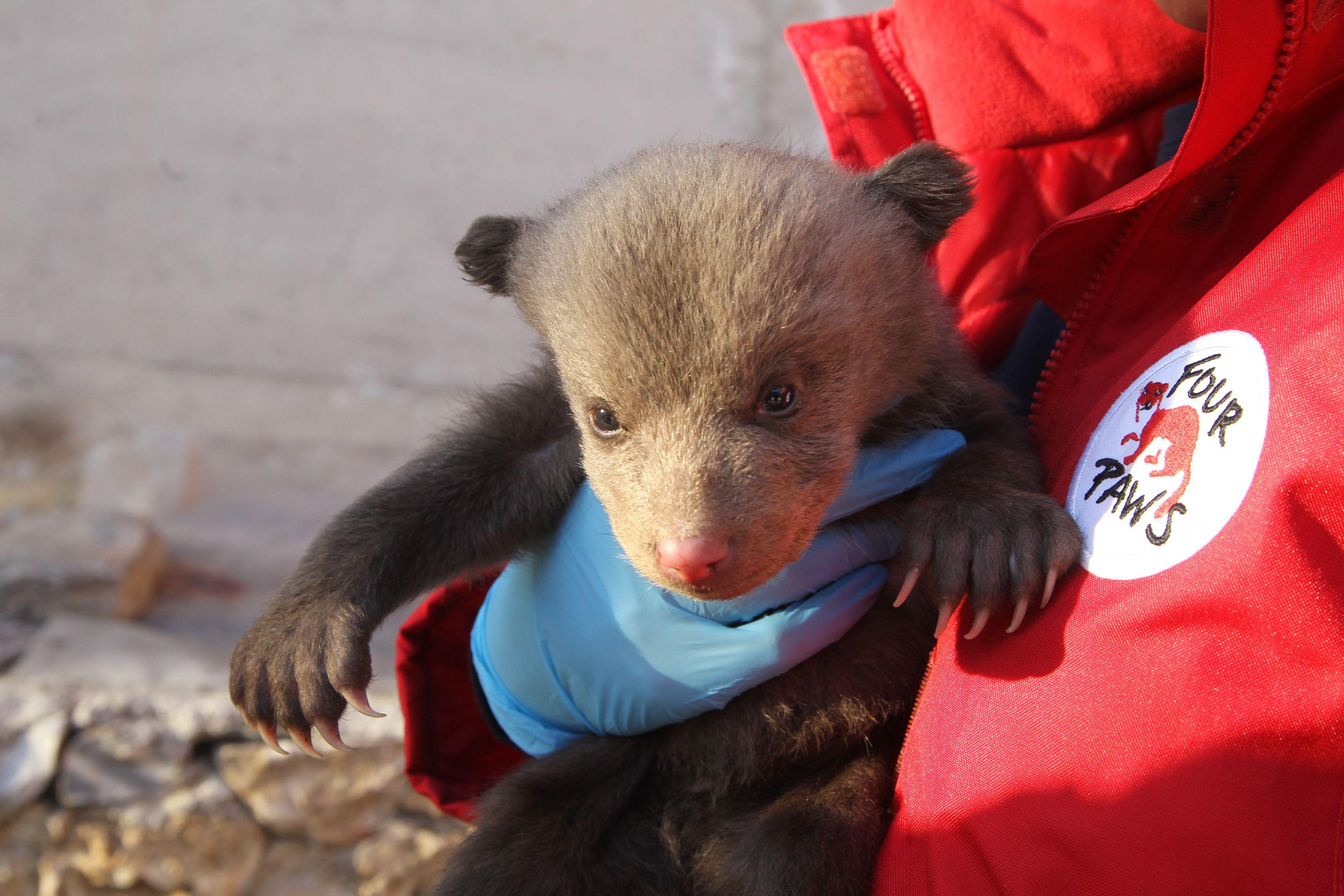 Bärenjunge oder doch ein Teddybär? (c) VIER PFOTEN | Hazir Reka