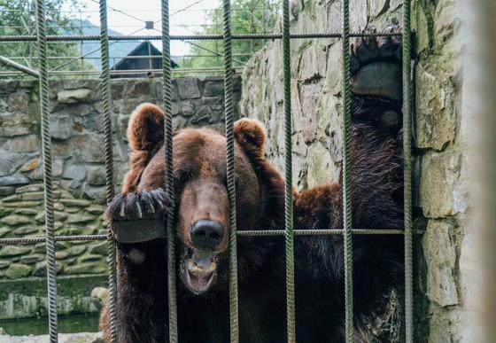 BearSikro behind bars