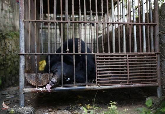 Bär Ben in seinem alten Käfig