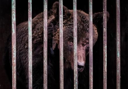 Bär in dunklem Käfig in der Ukraine, allein und traurig