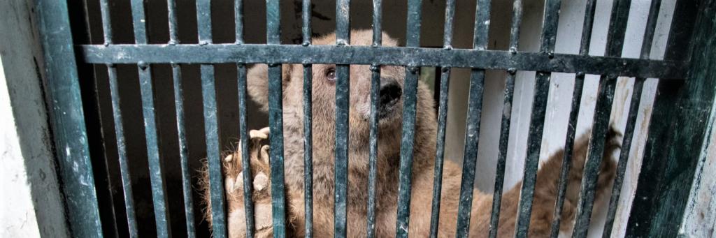 Beren in Marghazar Zoo