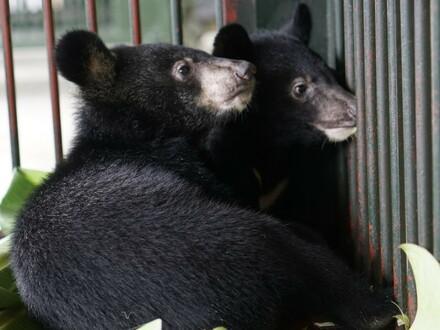 Rettung von zwei Bärenbabys
