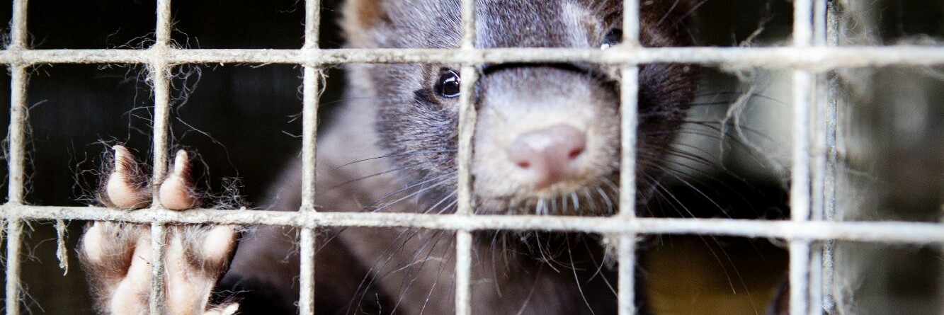End the cruel and deadly fur trade