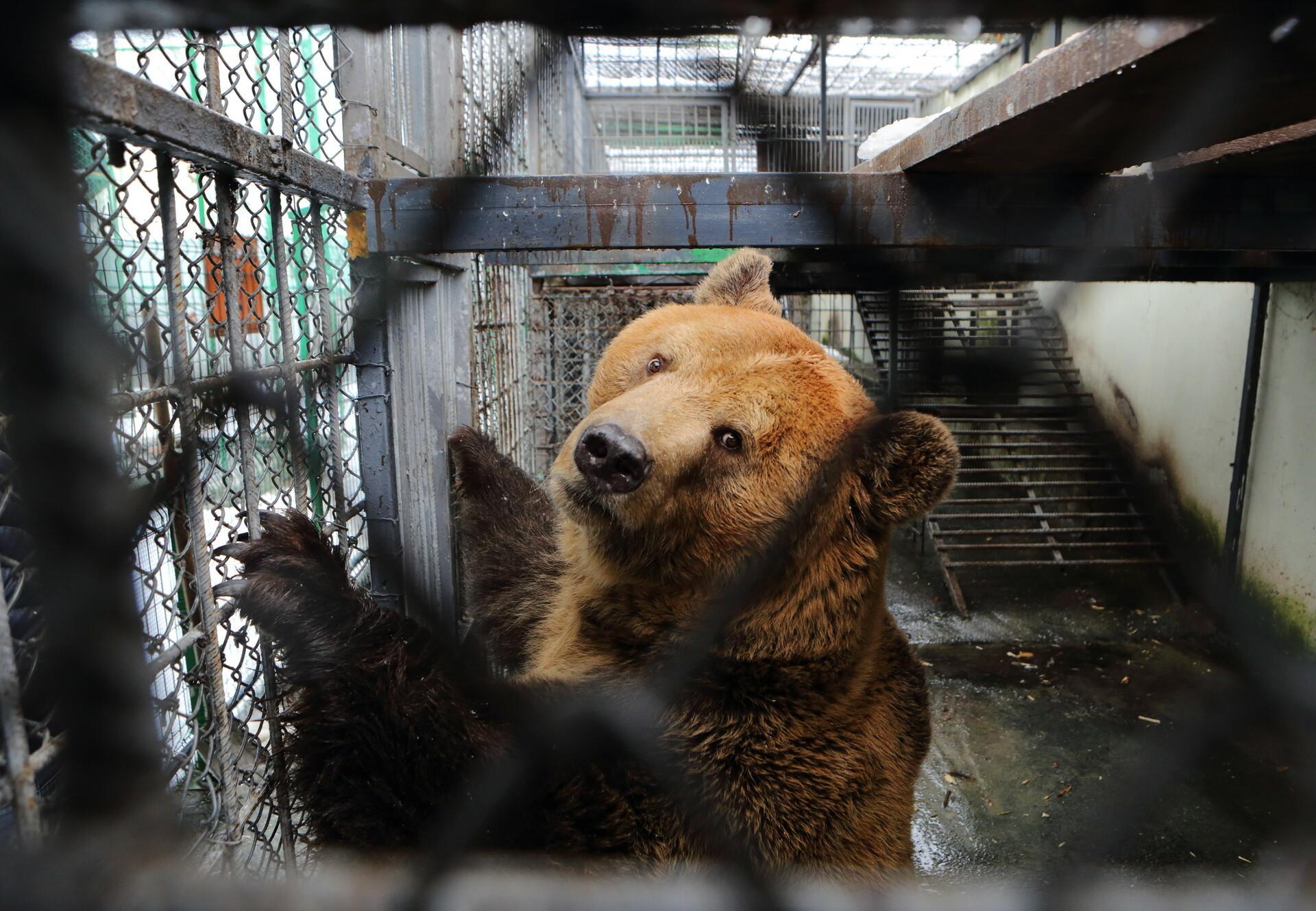 Neue Bären