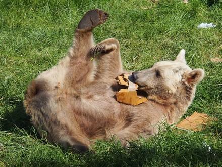 Bär Jerry spielt gerne