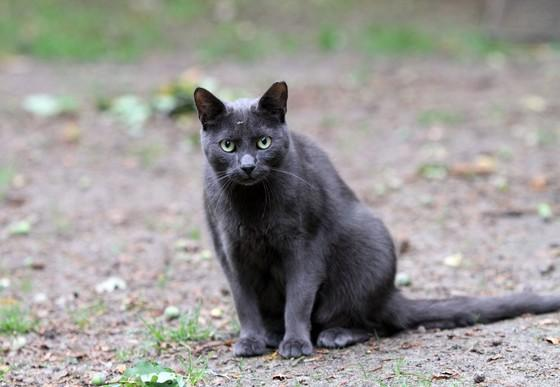 Trap-Neuter-Vaccinate-Return of stray cats