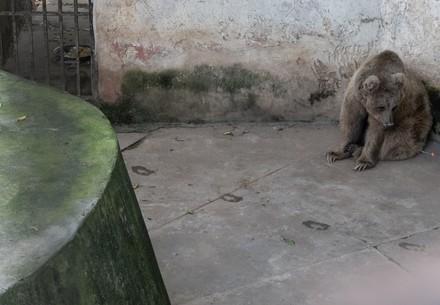 Bär im Zoo in Islamabad