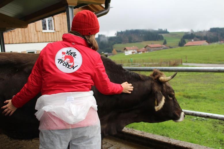 Das Wohlbefinden der Rinder wird genau kontrolliert