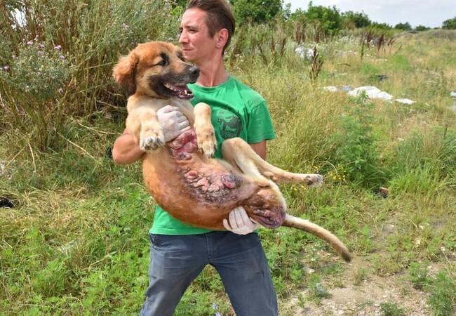 Verletzter Hund wird in Rumänien gerettet