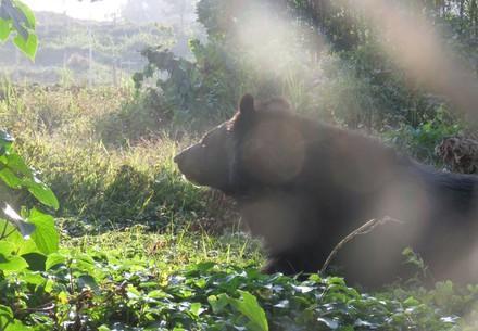 Bear in BEAR SANCTUARY Ninh Binh