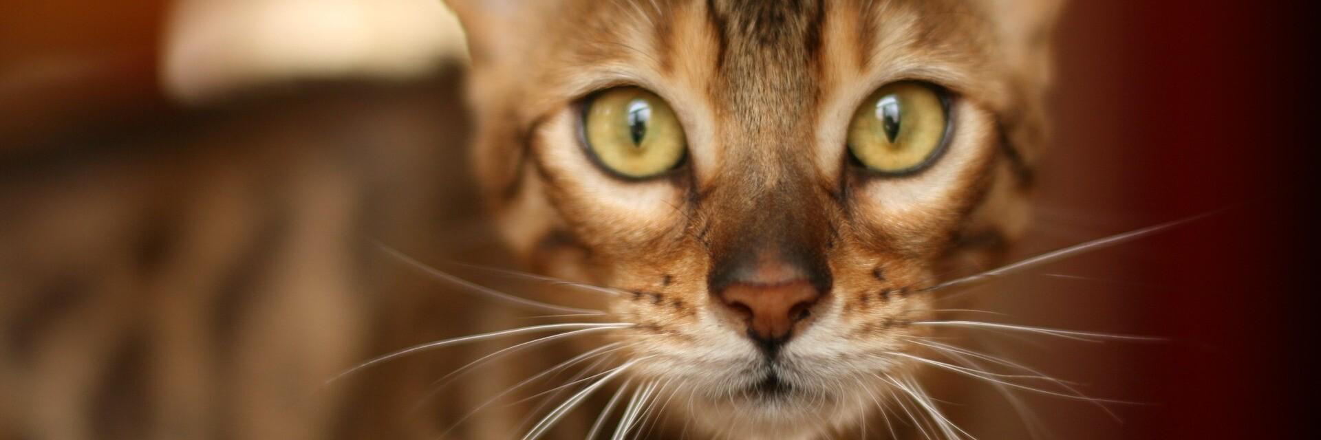 10 choses inédites à savoir sur les chats