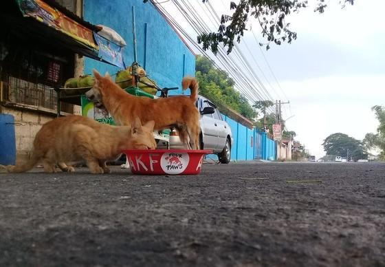 Feeding of stray animals in the Philippines