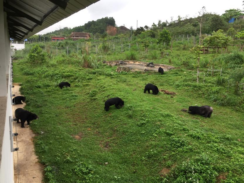 Bear Freddie with 6 others at BEAR SANCTUARY Ninh Binh