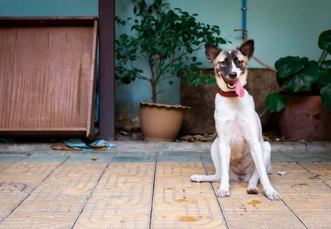 Hond Sopol is veilig