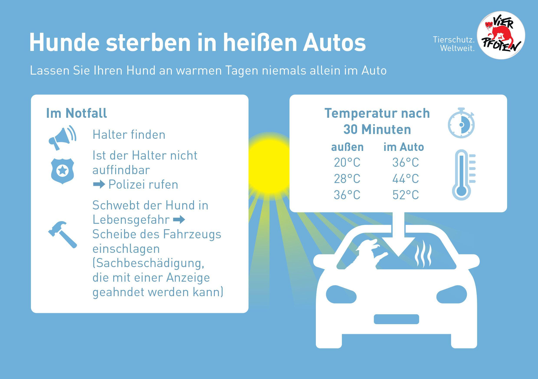 Hitze kann töten - Das Auto wird schon bei warmen Temperaturen für Hunde gefährlich