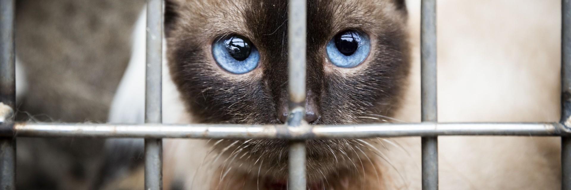 cat in cat meat cage