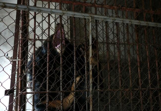 In diesem winzigen Käfig lebte Thu