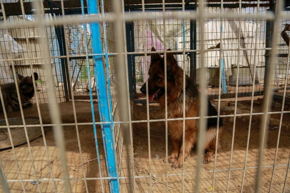 Dogs at Rafah Zoo