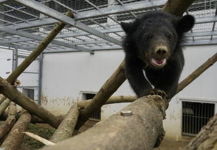 Gerettetes Bärenjunge in Vietnam