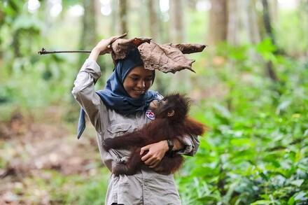 Orang-oetan weesje