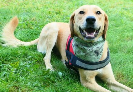 Hond Kaya