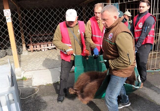 L'équipe de QUATRE PATTES lors du sauvetage de Dasha et Lelya