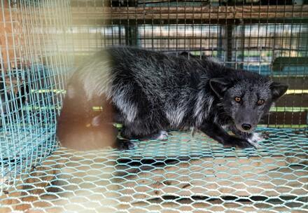 Maderhund im Käfig