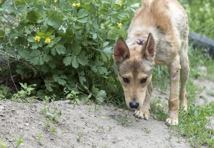 geretteter Streunerhund Jason in Bulgarien