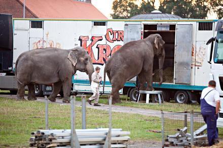 Elefanten steigen in einen Zirkuswagen