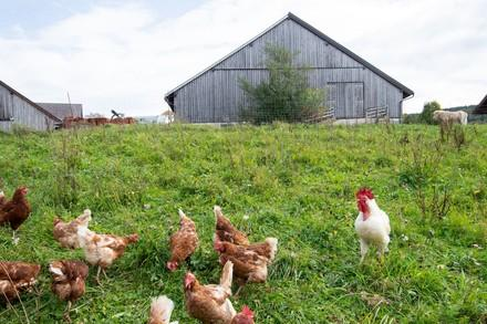 Bauernhof mit Hühnern