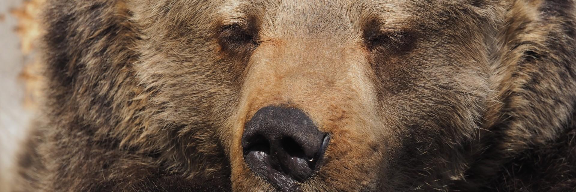 Bear Brumca in the sun
