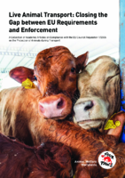 Live Animal Transport: Closing the Gap between EU Requirements and Enforcemen