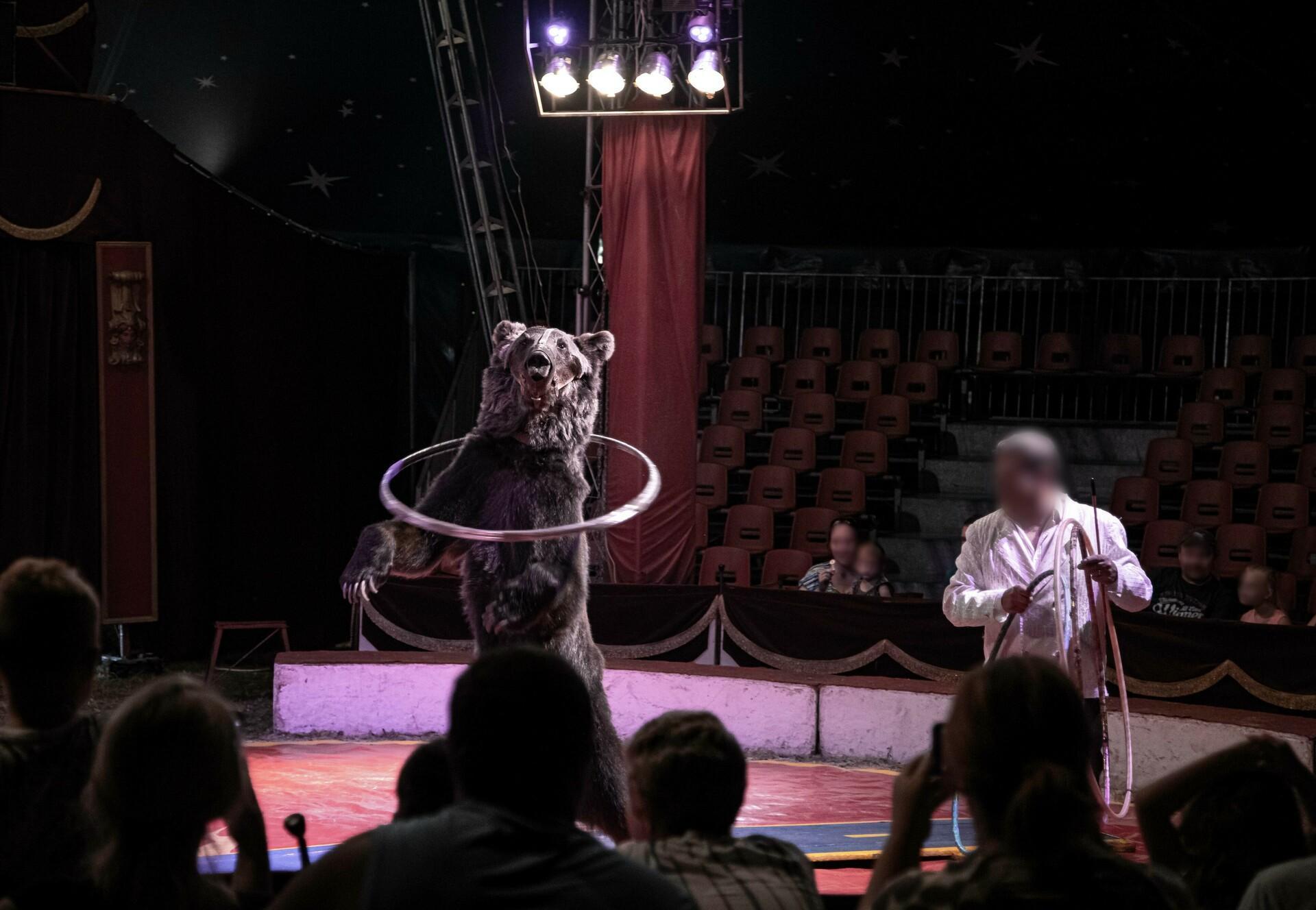 Bear in a Circus