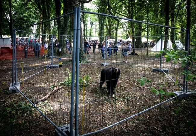 Bear in a cage in France