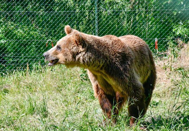 Rocco explores his enclosure