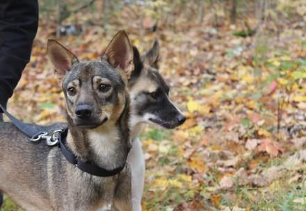 Dogs in the Autumn