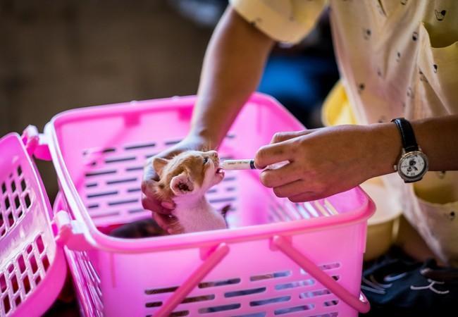 Fütterung eines Kätzchens