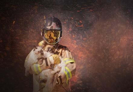Tierrettung: Feuerwehrmann in Funkenregen rettet Katze und Hund