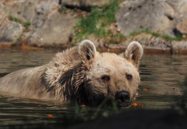 Jerry genießt ein Bad.