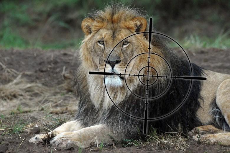 Gatterjagd Löwe