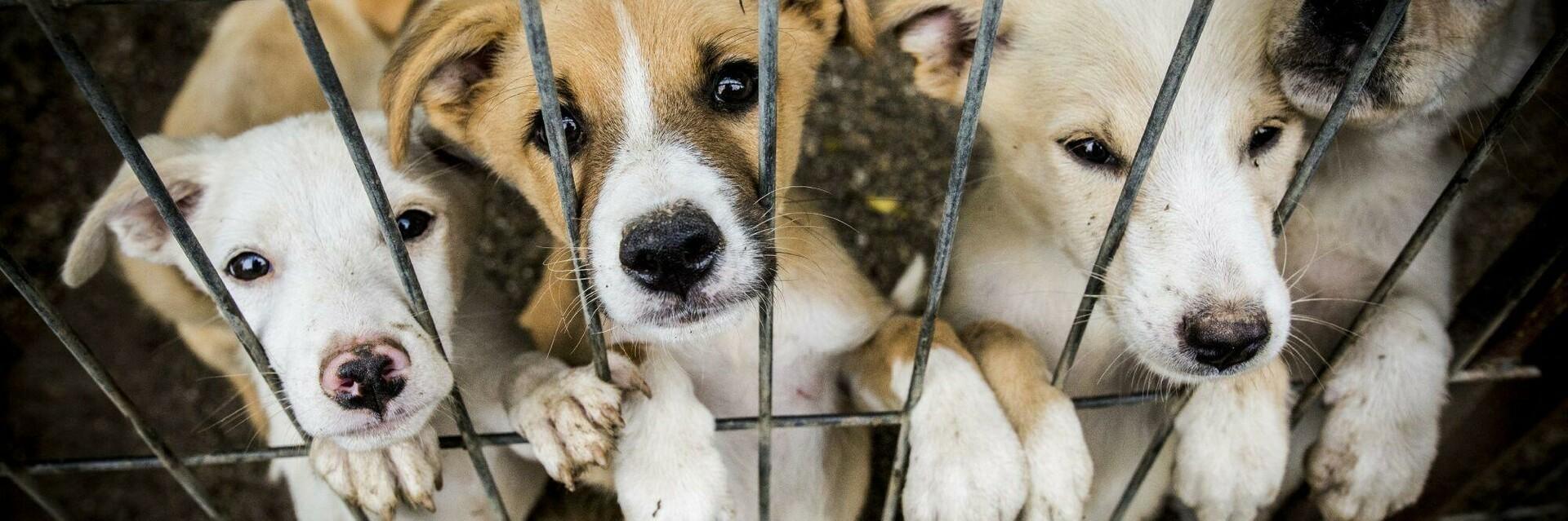 Des chiens à adopter