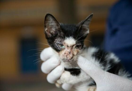 Die Kätzchen waren in einem schlechten Zustand als wir sie fanden