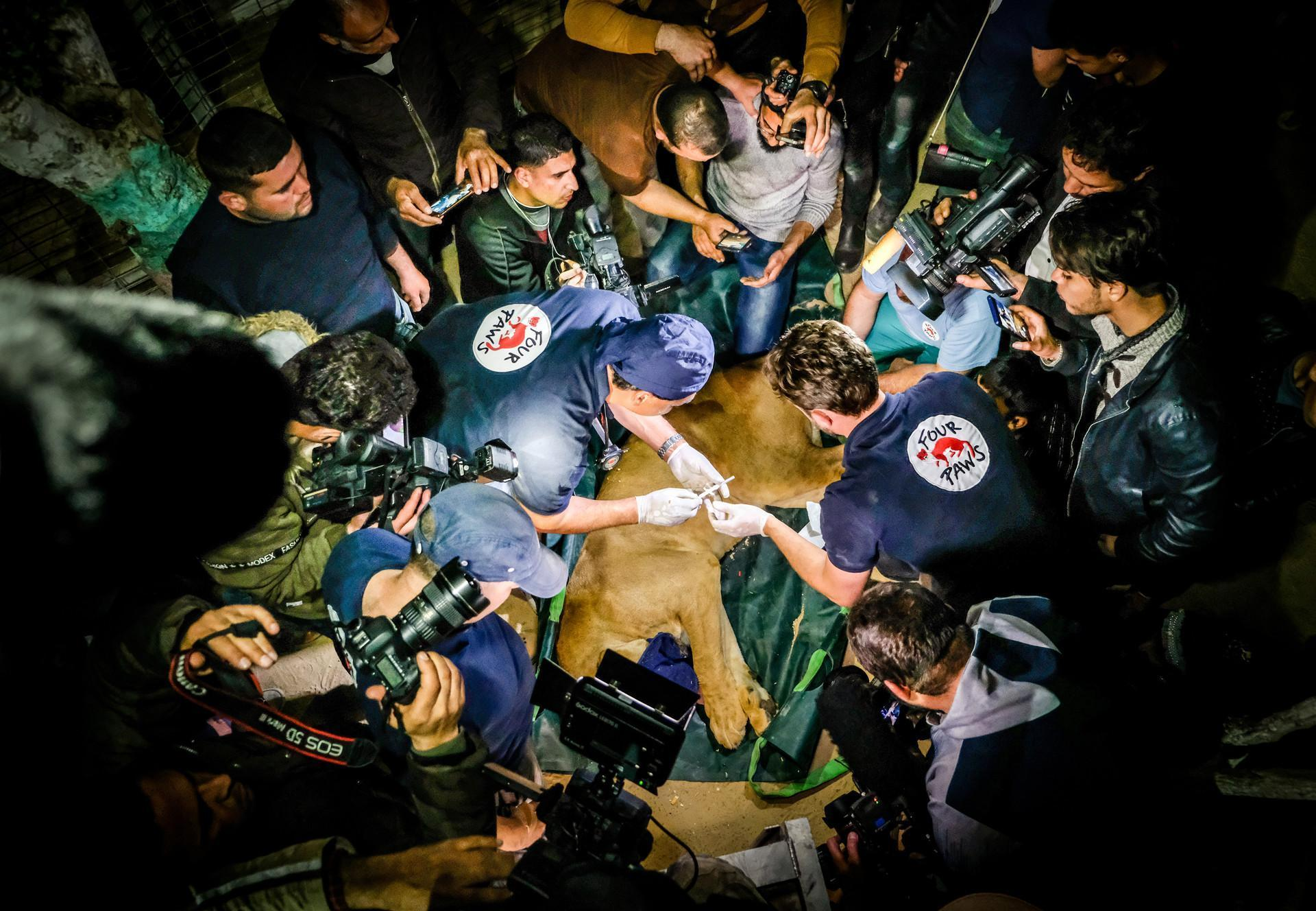Tierarztuntersuchung während der Rettungsaktion im Gazastreifen