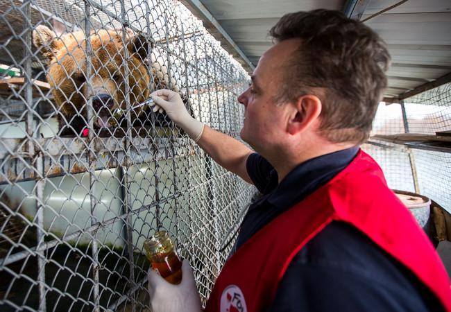 Tierarzt Frank Göritz hat noch eine Köstlichkeit für die Bären vor der Abreise. (c) VIER PFOTEN