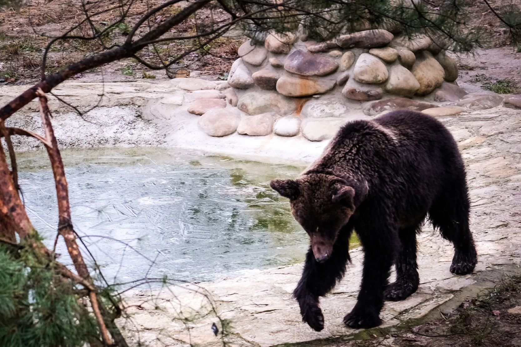 FOUR PAWS rescues Ukrainian fighting bear Mashutka